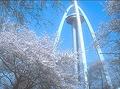 138タワーパークさくら祭り